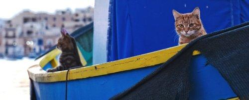 cats-sailing_1024