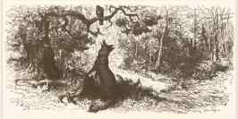 foxcrow