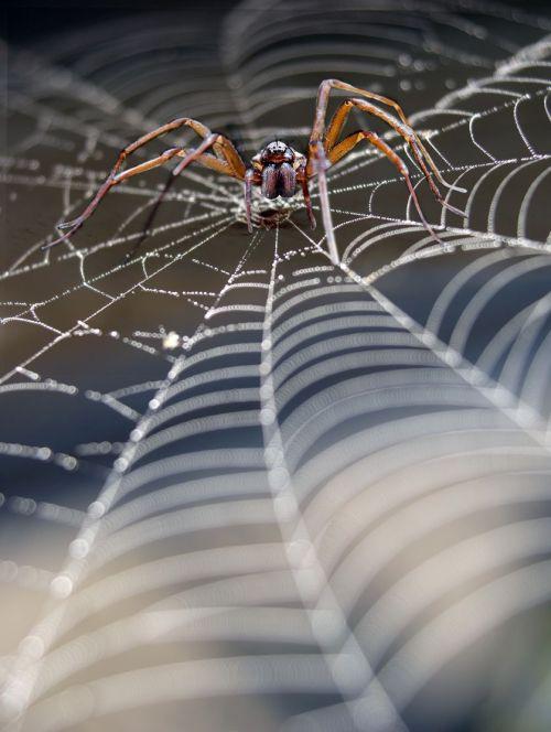 spider_silk_hybrid_material.jpg.838x0_q80