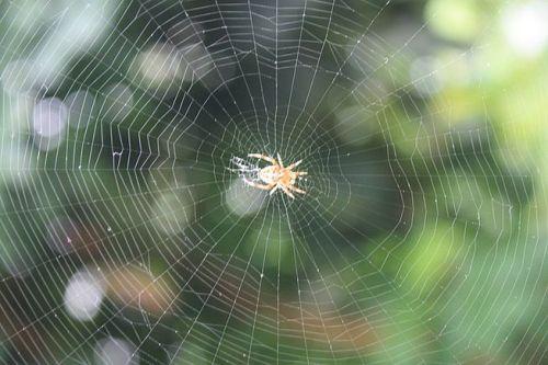 spiderweb.jpg.653x0_q80_crop-smart